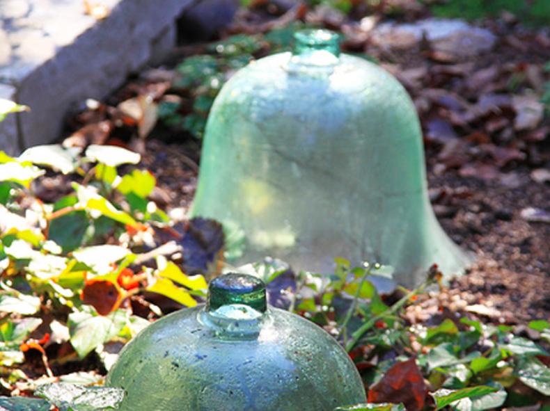 winter vegetable garden, winter garden, winter gardening, cloche, glass cloche, garden cloche