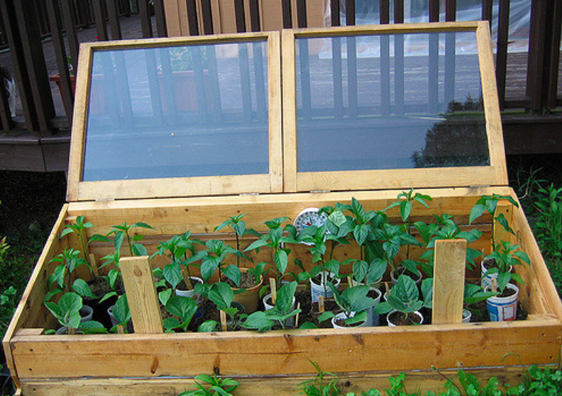 winter vegetable garden, cold frame, cold frames, winter garden cold frame