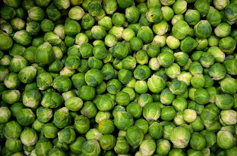 winter vegetable garden, Brussels sprouts, brassicas, growing vegetables in winter, winter vegetable gardening