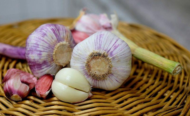 garlic varieties, garlic, growing garlic, planting garlic, turban garlic, softneck garlic