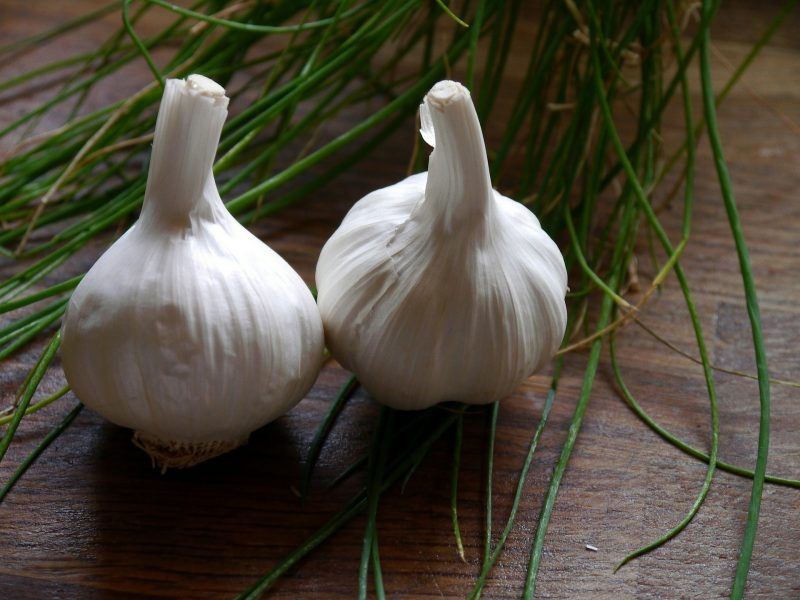 garlic varieties, garlic, softneck garlic, soft neck garlic