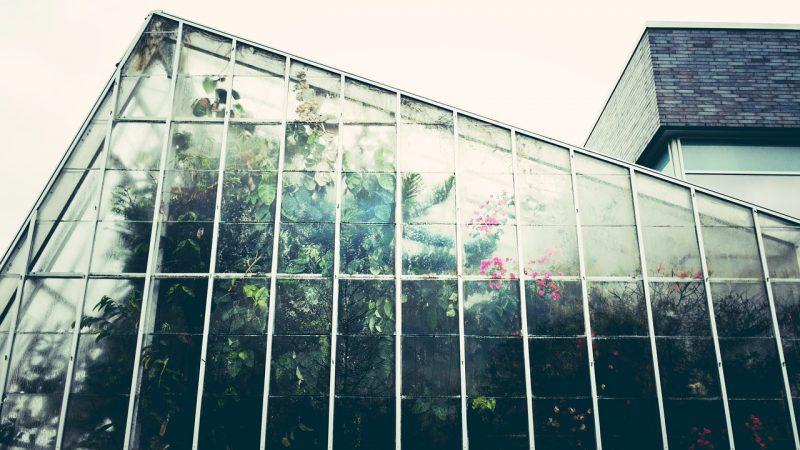 winter vegetable garden, greenhouse, greenhouses, winter garden, growing food in greenhouses