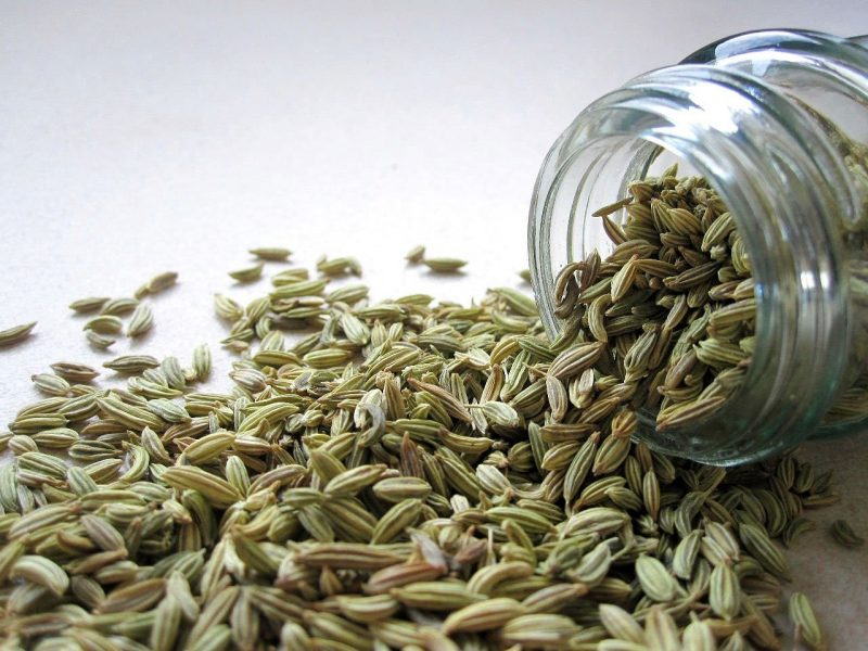 how long do seeds last, how to store seeds, seed storage, safe seed storage