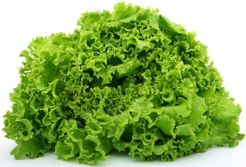 growing lettuce, loose-leaf lettuce, loose leaf lettuce, looseleaf lettuce, lettuce, lettuce varieties