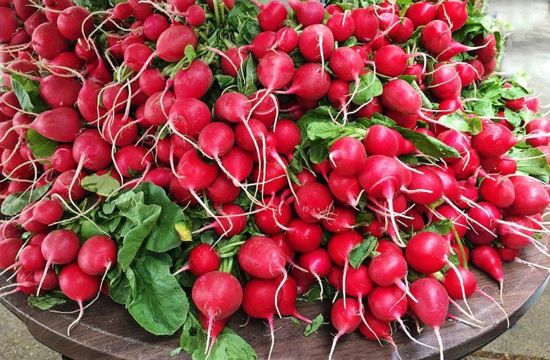 winter vegetable garden, winter vegetables, gardening in winter, growing vegetables in winter, radishes, growing radishes