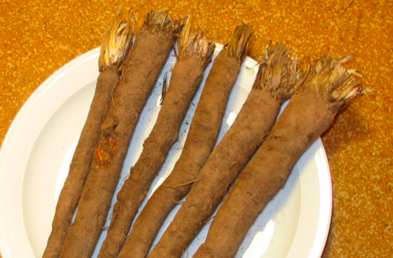 Black salsify roots