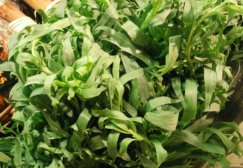 herbs that grow in shade, shade herbs, shady herbs, herbs for a shade garden, tarragon, growing tarragon in shade, estragon