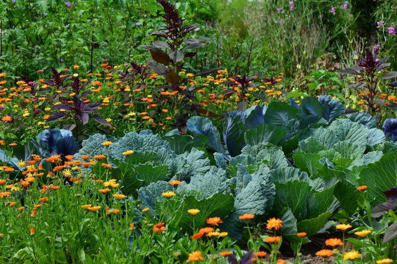 Diverse vegetable garden