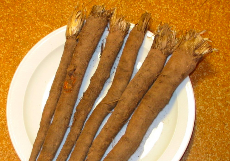 scorzonera roots