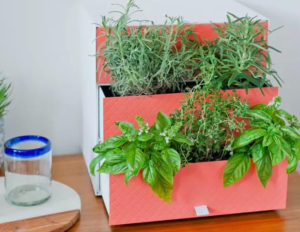 herb drawer garden