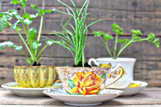grow herbs in teacups
