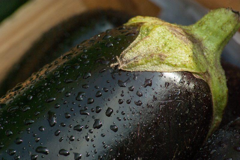 eggplant care