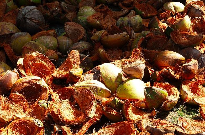 coconut coir chips
