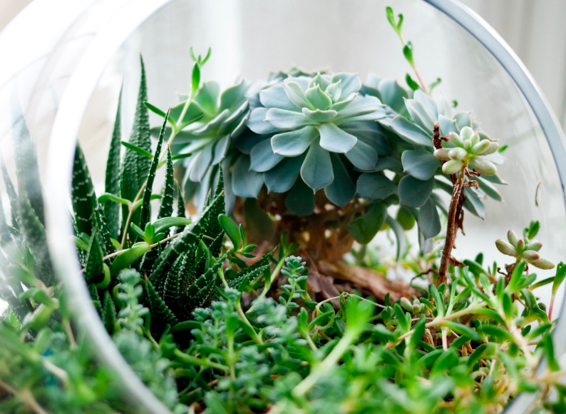 Glass jar DIY terrarium