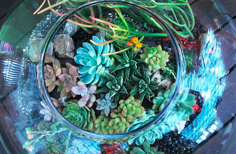 Overhead view of a DIY terrarium