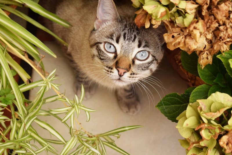 cat-friendly plants