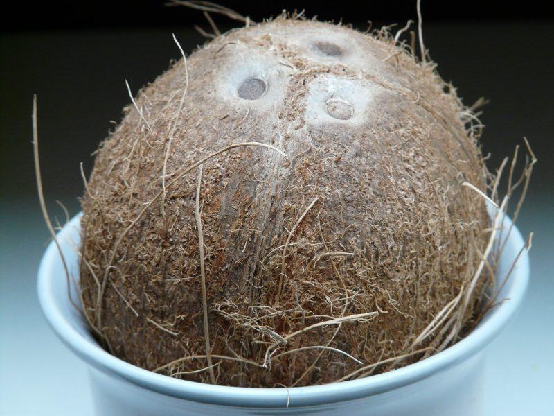 coconut coir shell