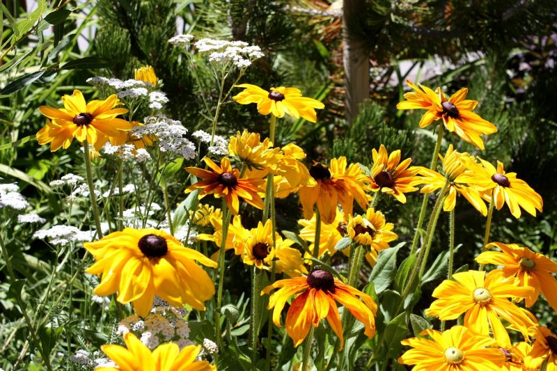 10 Of The Best Perennial Flowers That Bloom From Spring To Fall