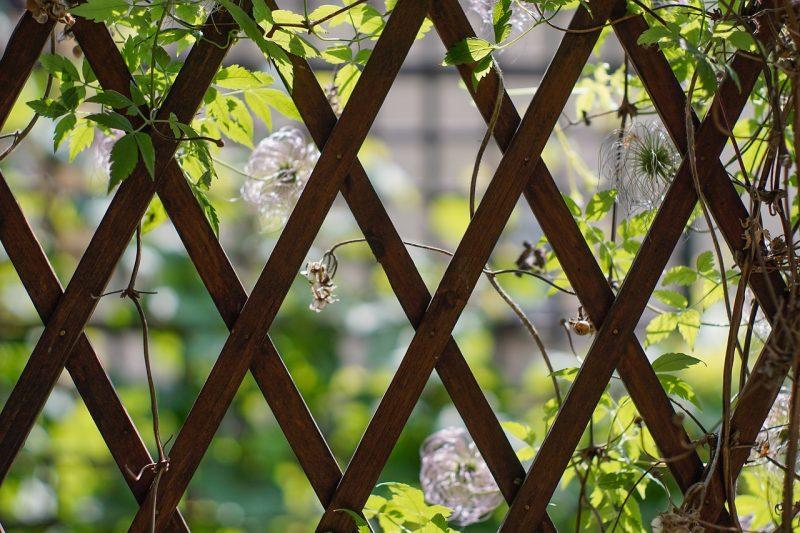 lattice for a vertical vegetable garden