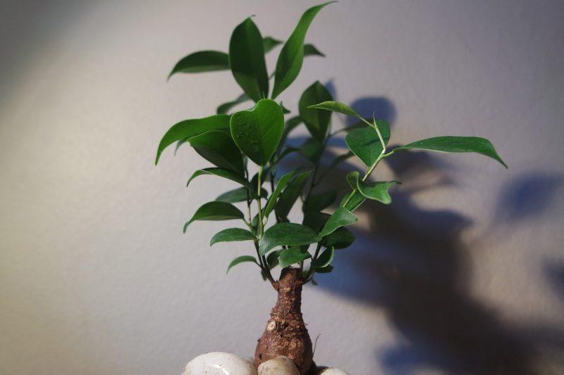 Tree repotting