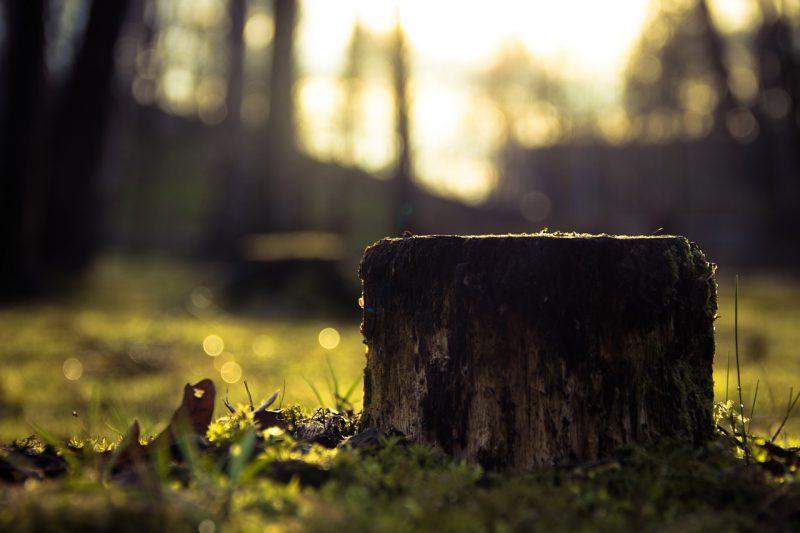 how to kill a tree stump
