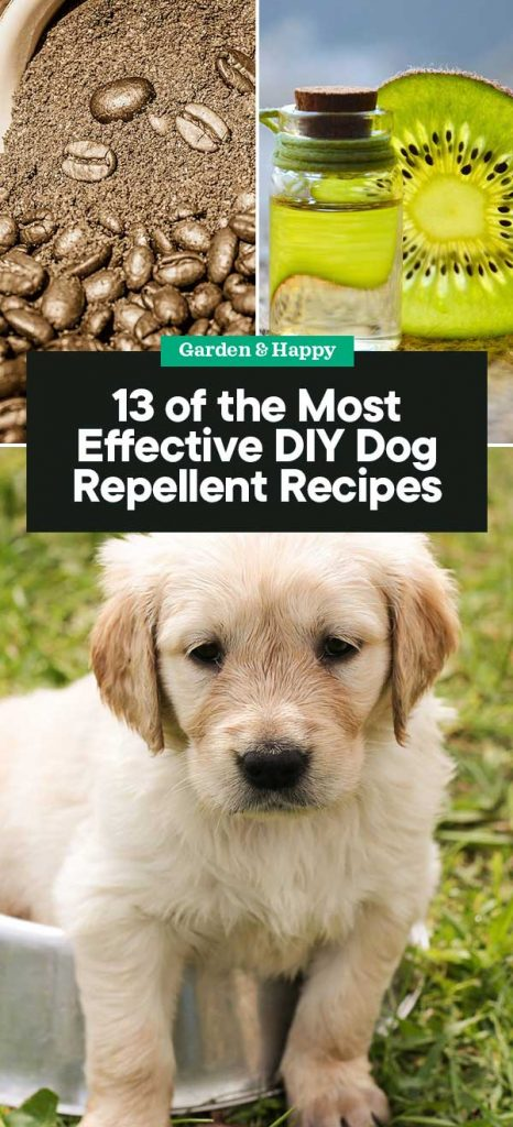 DIY Dog Repellent Recipes