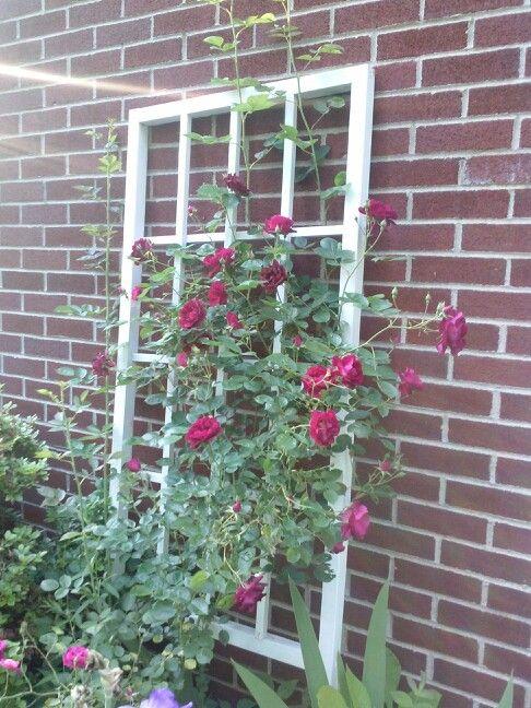 Window trellis ideas