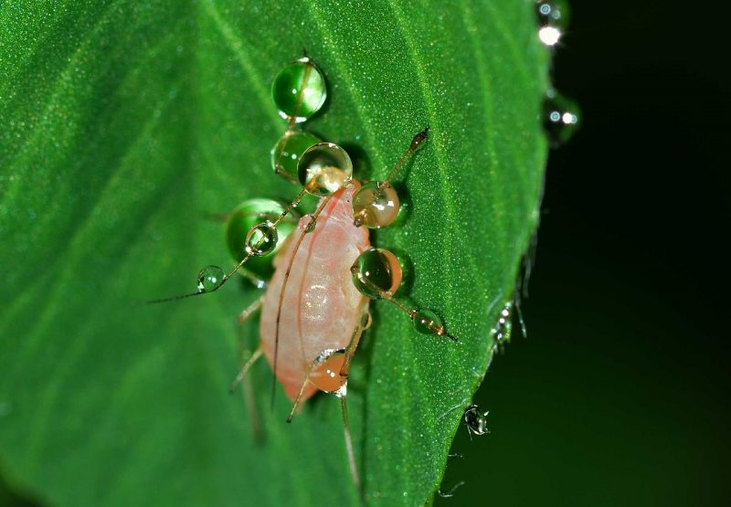Use insecticidal soap to banish bad bugs