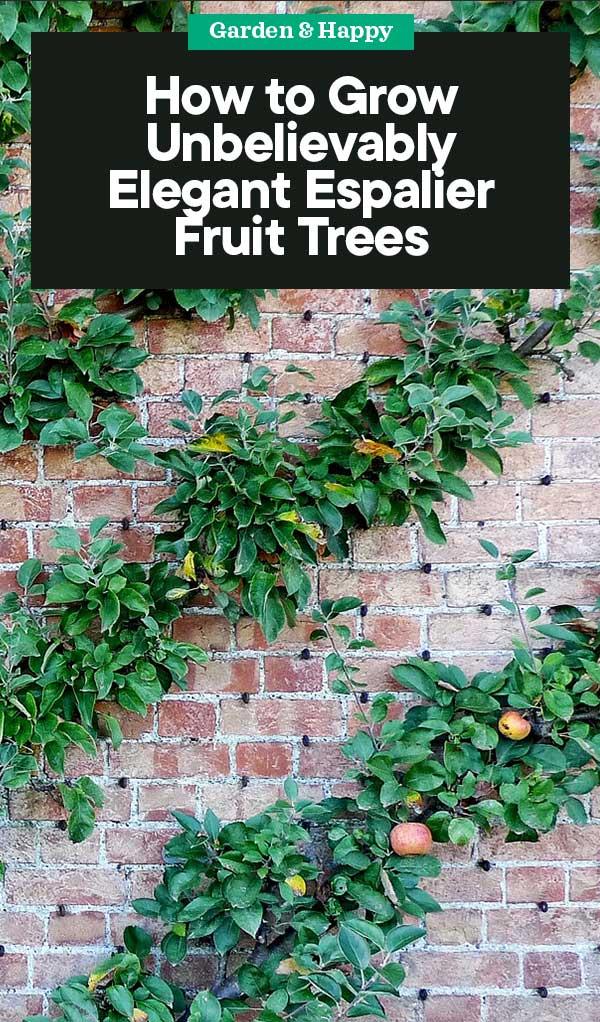 How To Grow Espalier Fruit Trees Garden And Happy