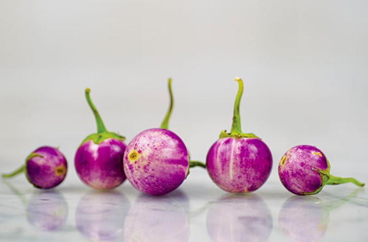 Thai Lavender Frog Egg Eggplant