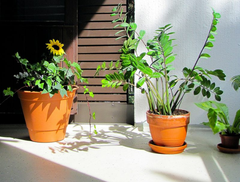 ZZ bathroom plants