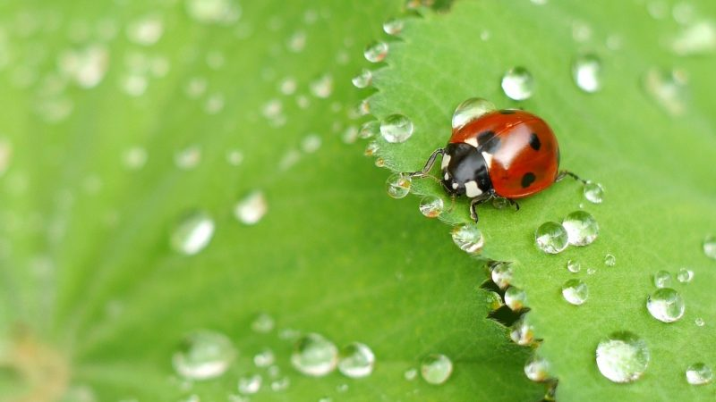 Where baby ladybugs live