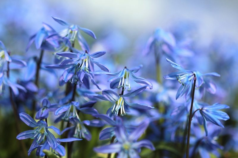 30 Of The Best Bulb Plants To Choose For A Breathtaking