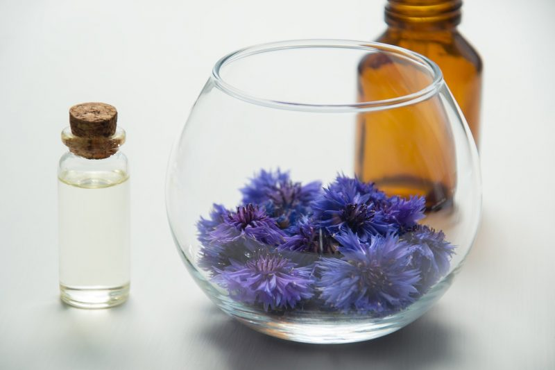 Cornflower grow guide medicine