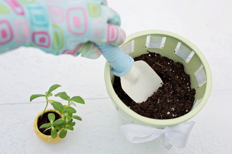 New cucumber plant