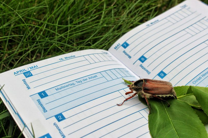 Garden journal for seedbed prep