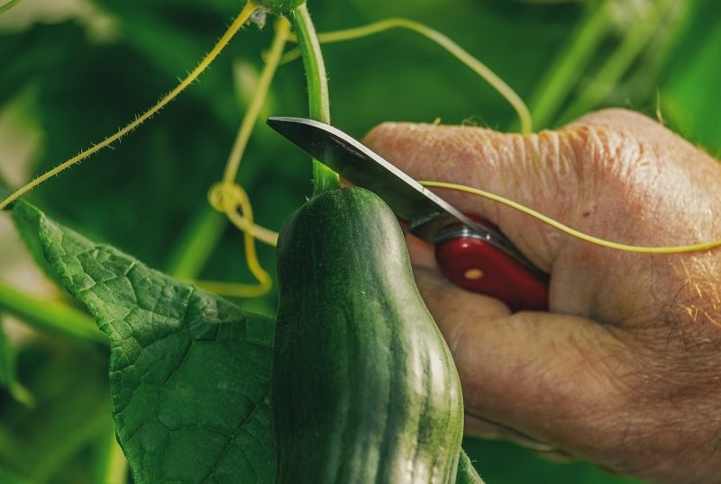 12 Climbing Vegetables That Will Thrive When Trained Up Garden