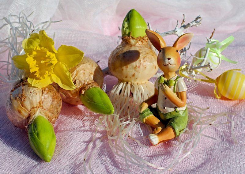 Hyacinth bulb plants