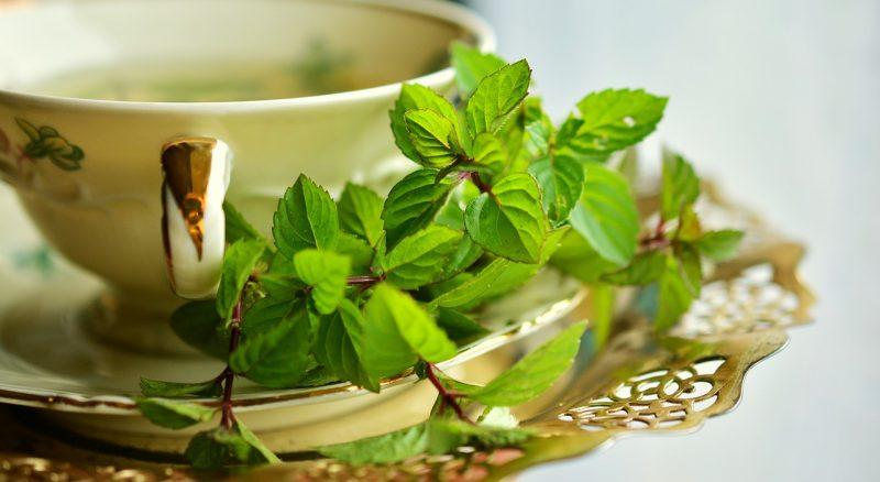 Peppermint perennial herbs