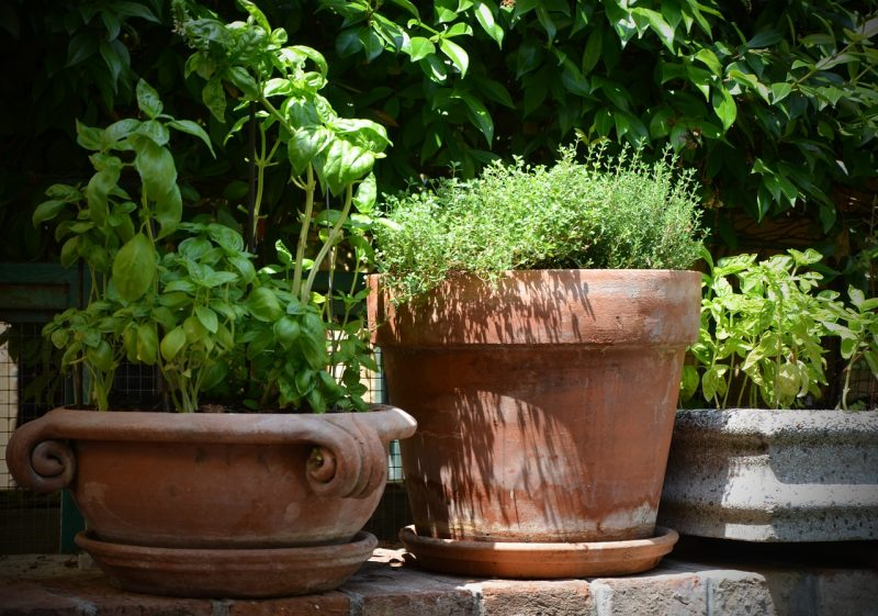 Patio herb garden pots