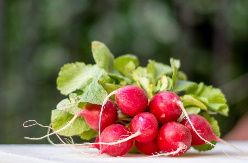 Saxa Radishes for a balcony vegetable garden
