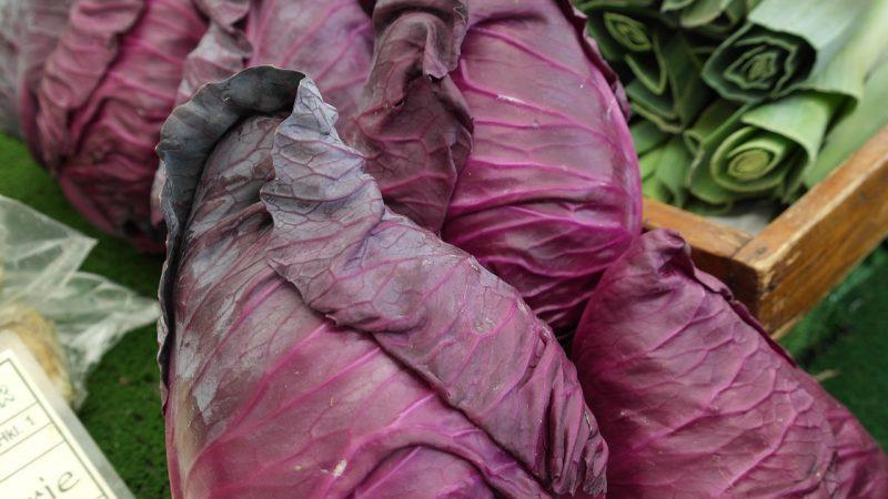 Kalibos red cabbage