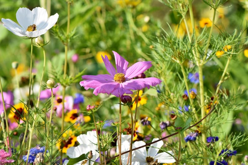 Purple flower garden ideas
