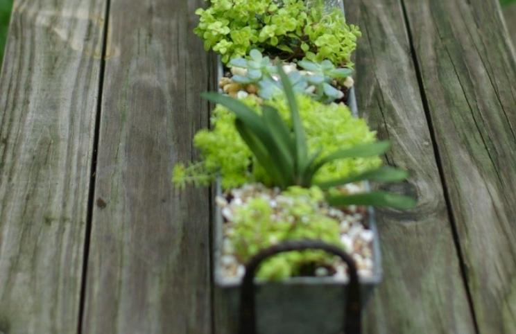 Gutter garden centerpiece