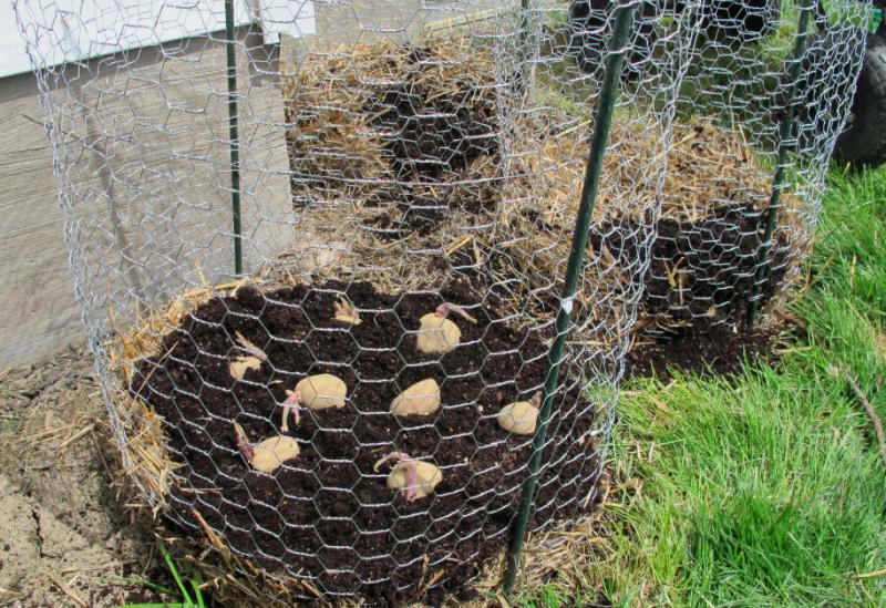Potato tower garden layout