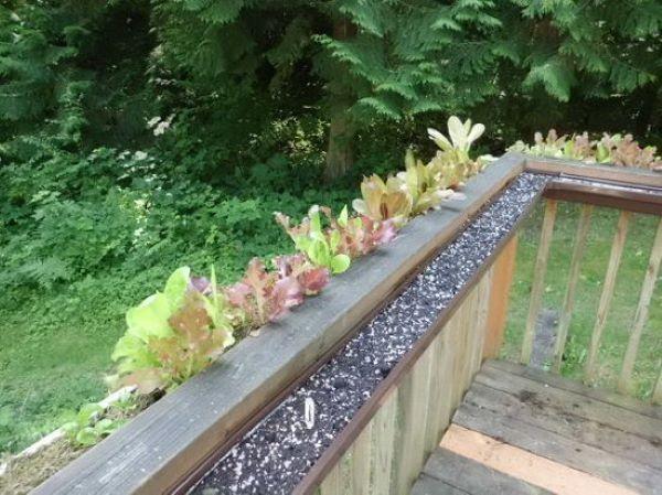 deck gutter garden