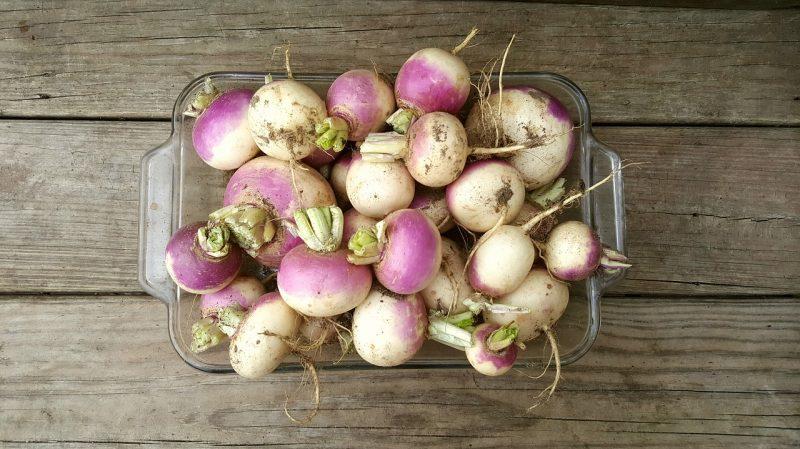 what do turnips taste like?