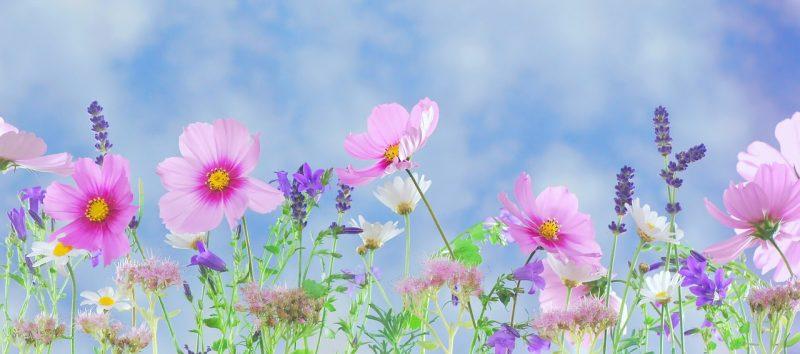 best flowers for full sun