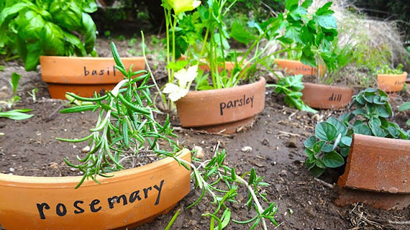 Broken pot plant markers