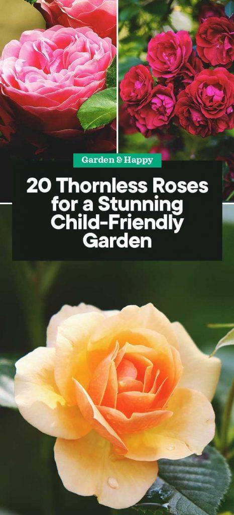 20 Thornless Roses For A Stunning Child Friendly Garden Garden